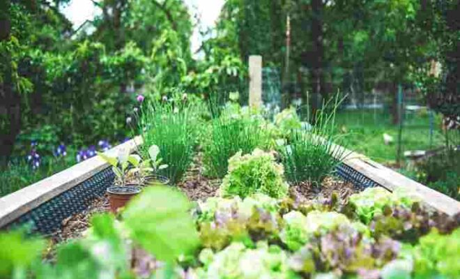 Best Natural Insecticide for Vegetable Gardens